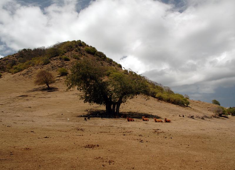 Gwada2010-0984.jpg