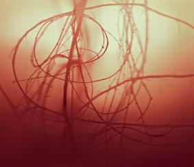 Katrin Freisager, « Landscape » (détail), 2010 | C – Print Photograph / Diasec - 120 x 138 cm