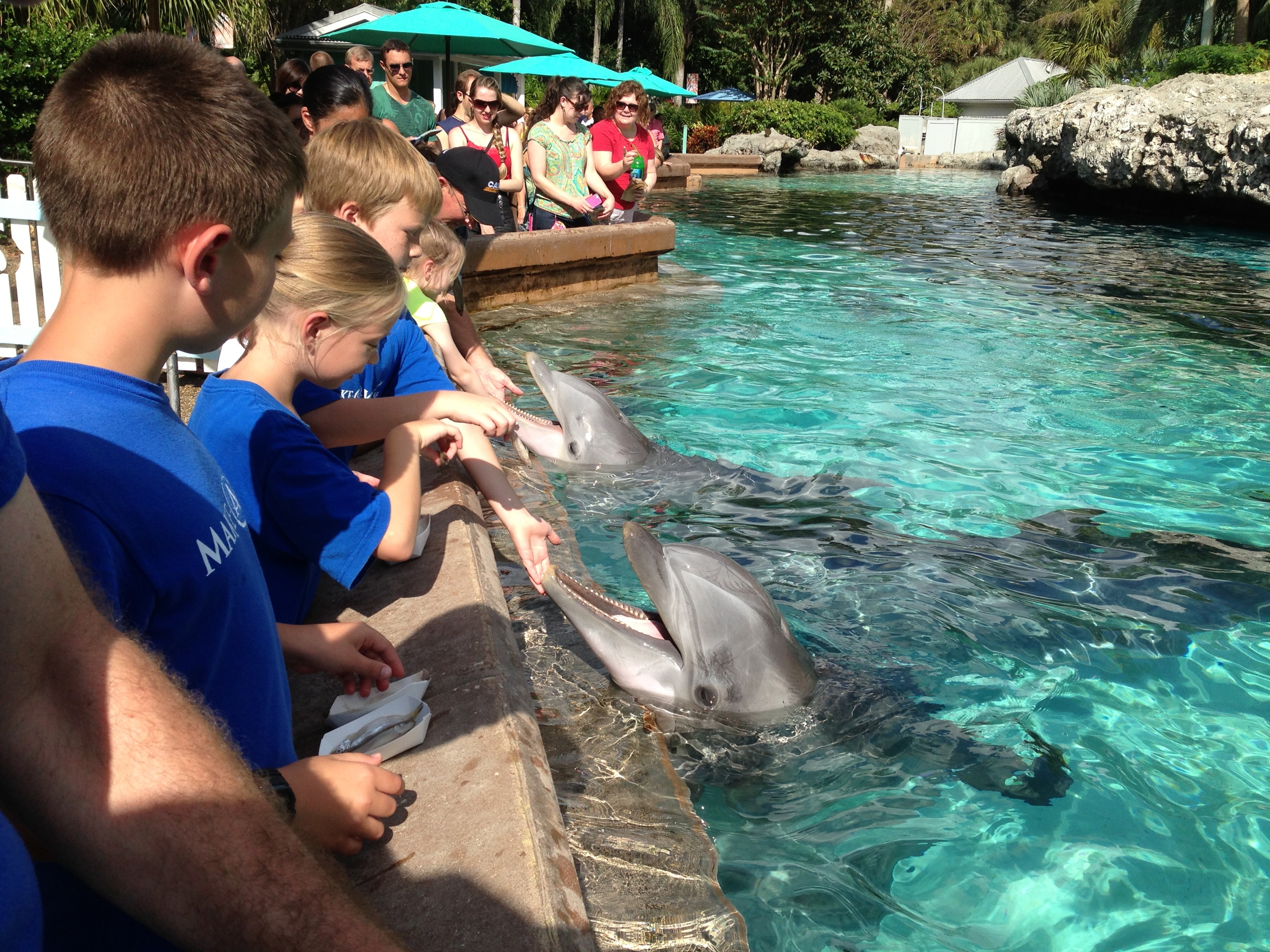Hannah, 10  Life- threatening heart condition  Wish: To go to Florida and swim with the dolphins