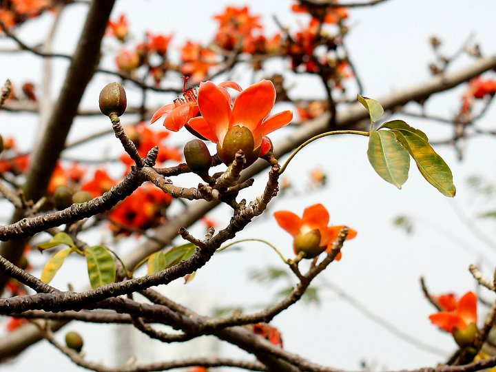 Photographer: Chi Kin Lai of Tai Po