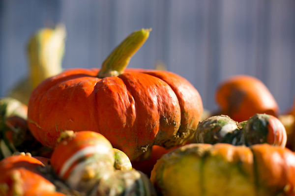 What To Do With Excess Pumpkins - Sara Crowder Photography 2012©