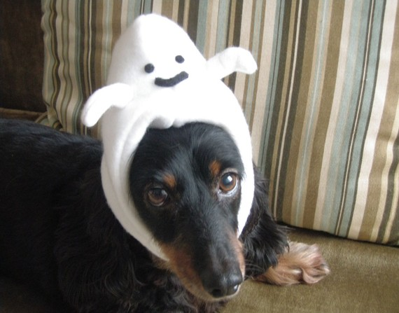 Casper the friendly Doberman. Isn't this hat cool?  I love it.   per the fri