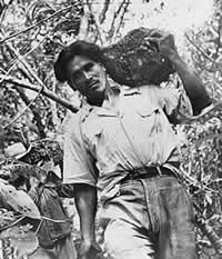 Man carrying wild yam out of the jungle.