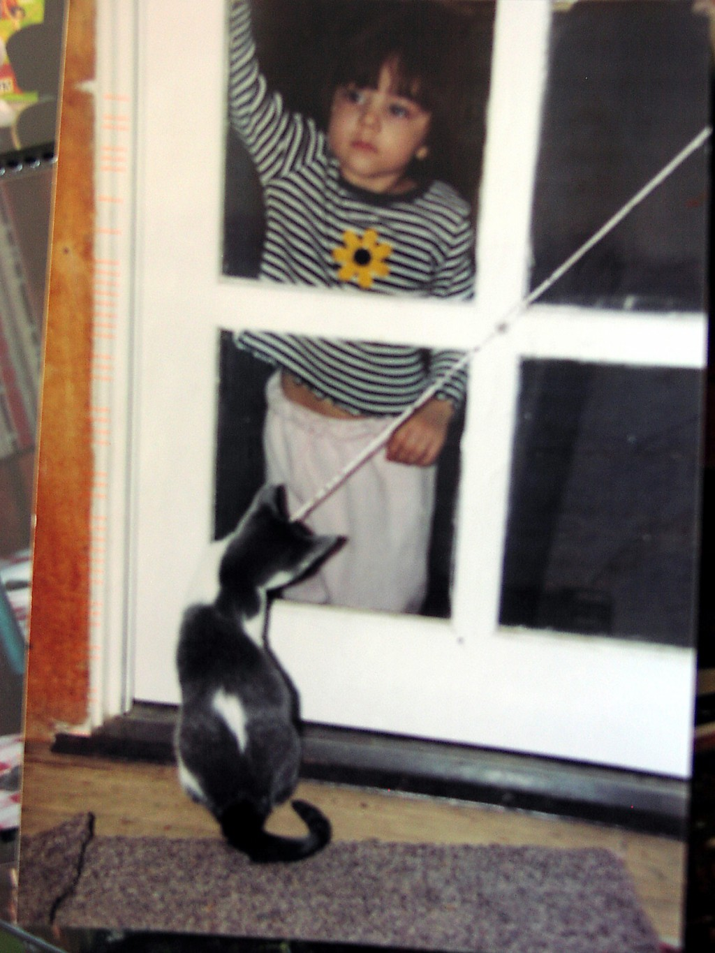 little girl at screen door with black and white cat.  Just like any postcard, pictures can be vertical or horizontal.  Source: Millie Kohler, CC BY-NC-ND, via special permission by Millie Kohler
