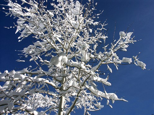 A  spen after Blizzard     Source: CameraHound, GNU, Creative Commons via Wikimedia Commons