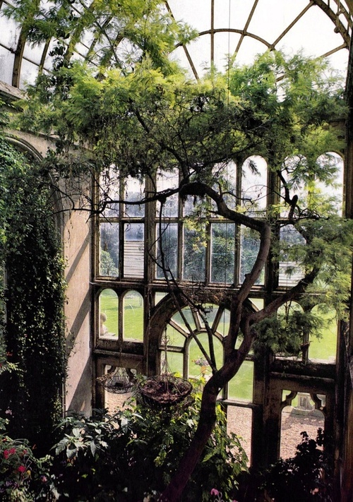Yes, you can even do this if you have the space. This indoor garden has the perfect spot for a tree in front of the two story high window. Antique charm.