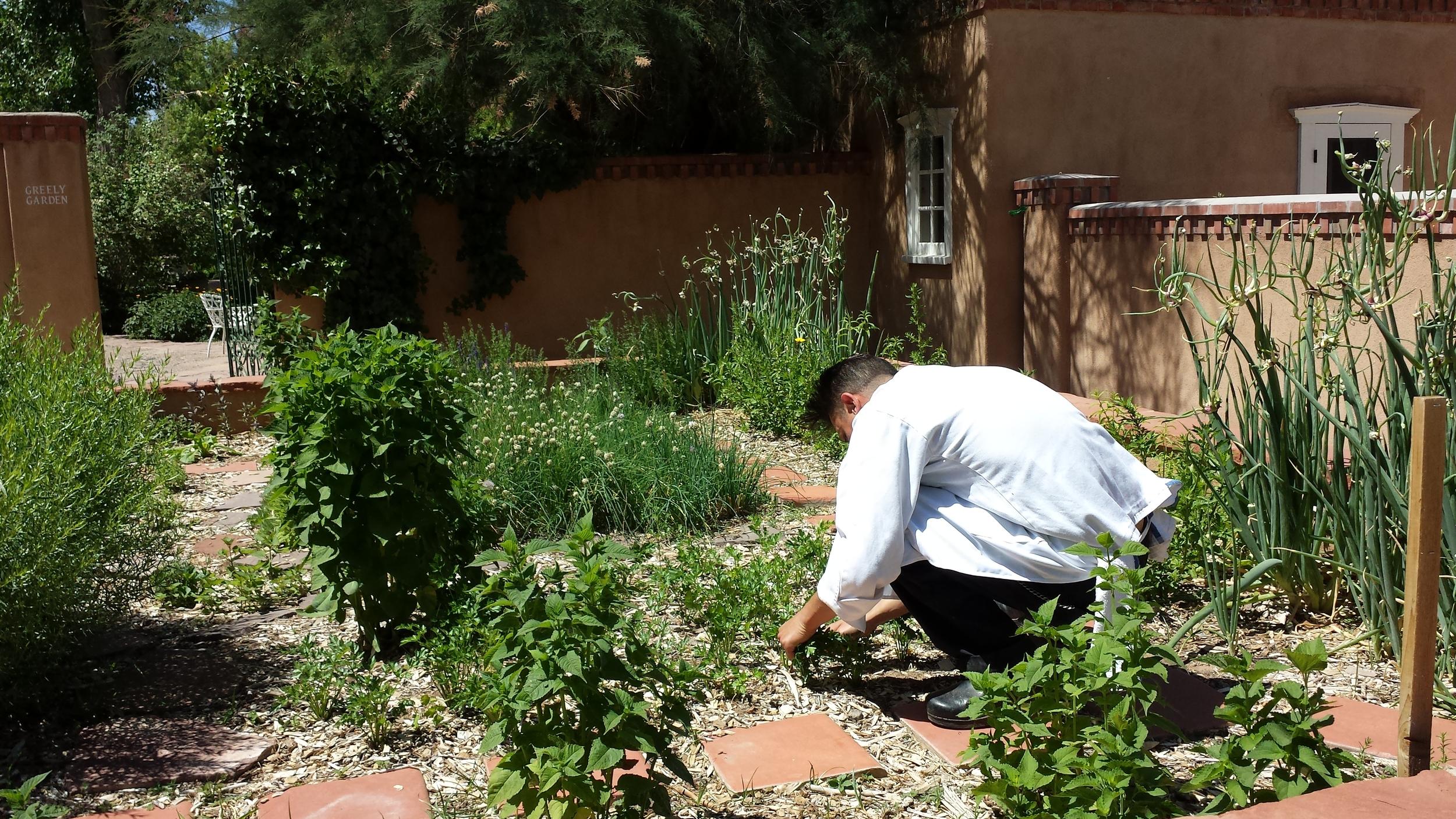 Harvesting fresh herbs for breakfast at Los Poblanos Historic Inn and Farm  (credit Eye on Life Magazine)