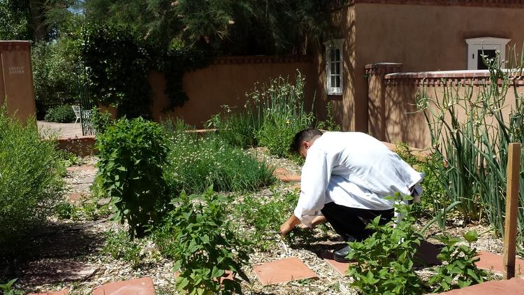 harvesting+fresh+herbs+for+breakfast+at+Los+Poblanos+Historic+Inn+and+Farm.jpg