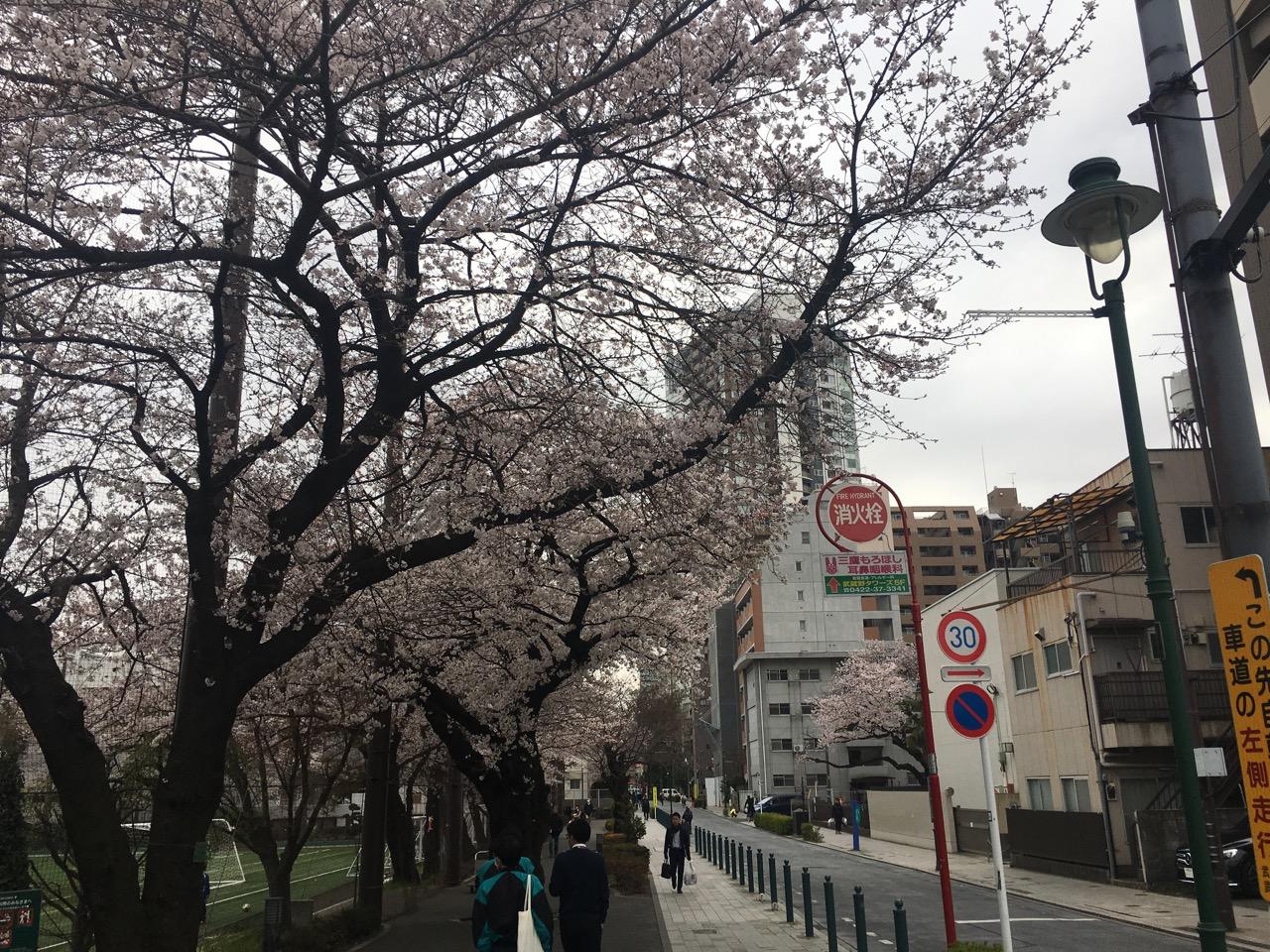 """""""Cercar la voce"""" in Tokyo / Musashino"""