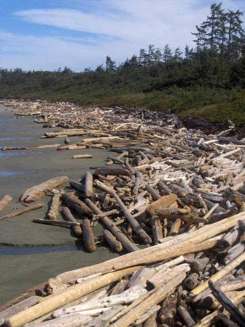 Logs piled up on the beach in Pacific Rim National Park.