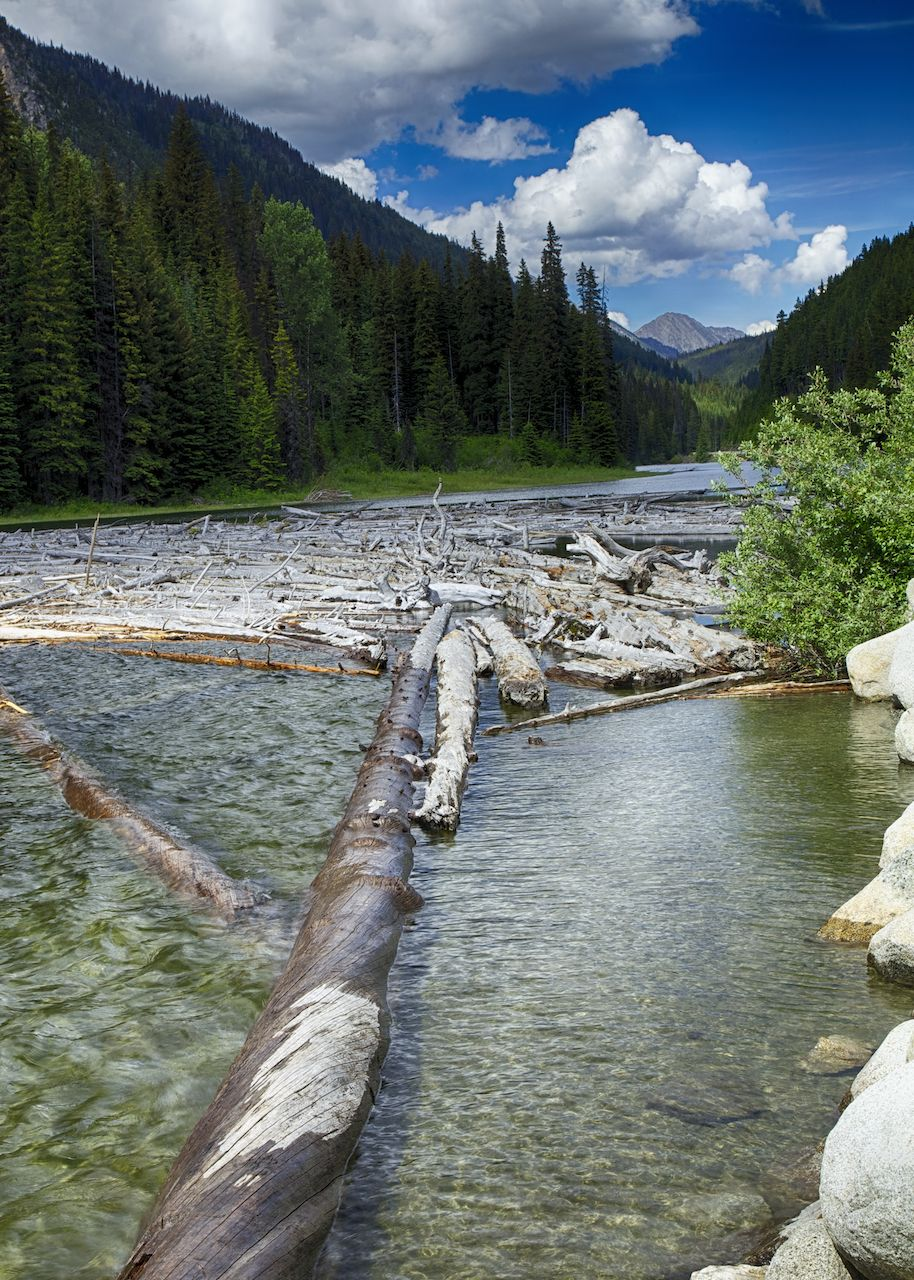 A large log jam sits at one end of Duffey Lake and provides a good subject for some pictures.