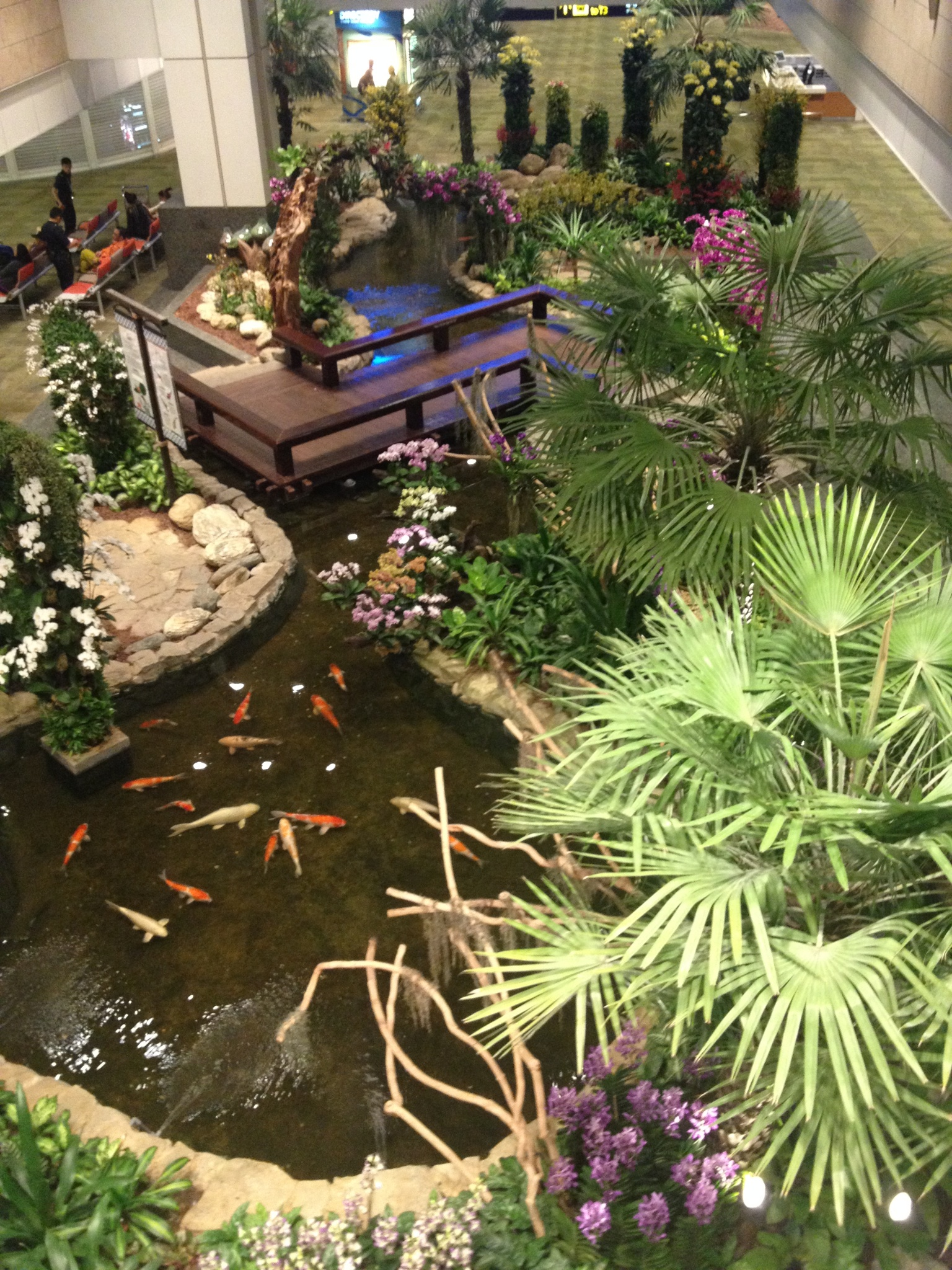 The Singapore airport is quite nice, for an airport. There are lots of garden areas set-up in many parts of the airport. This nice koi pond offered a distraction for a while during my layover.