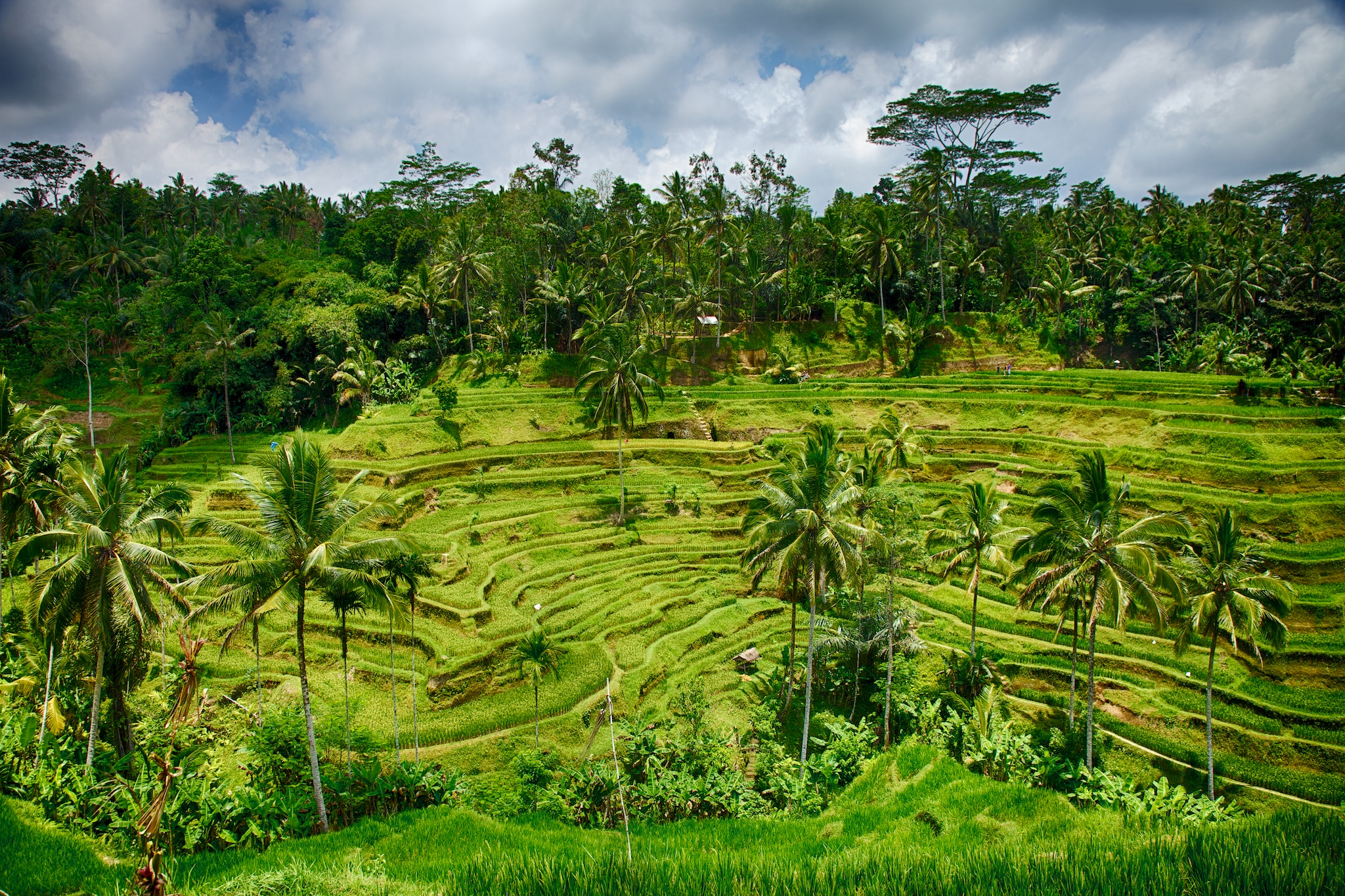 Probably the single most beautiful location we saw in Bali. While a total tourist trap, the rice terraces are very cool, and just something you don't see in our part of the world.