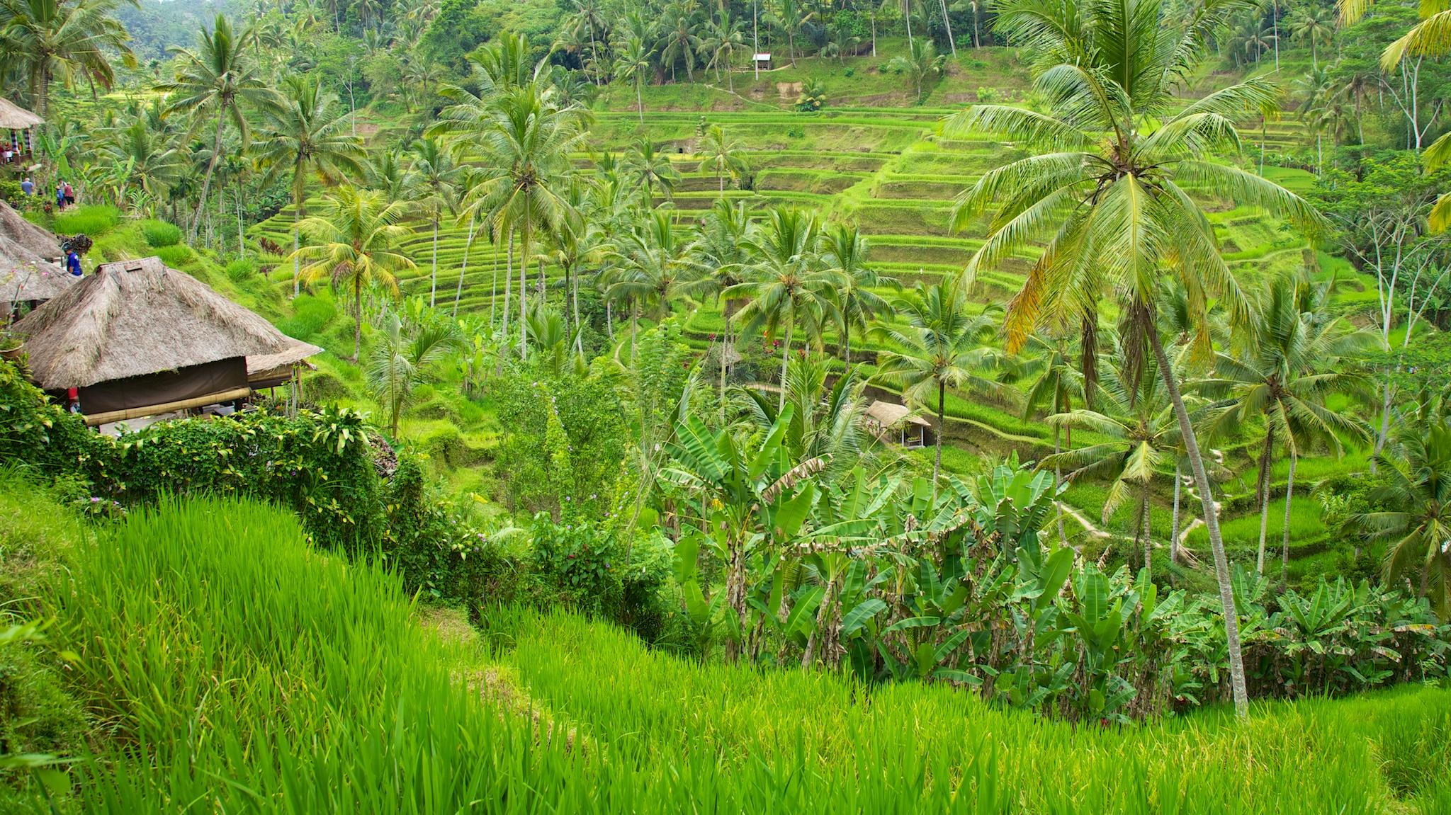 Bali  36234.jpg