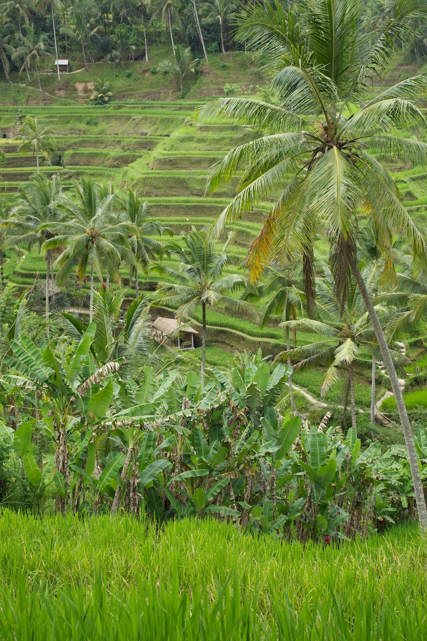 Bali  36235.jpg