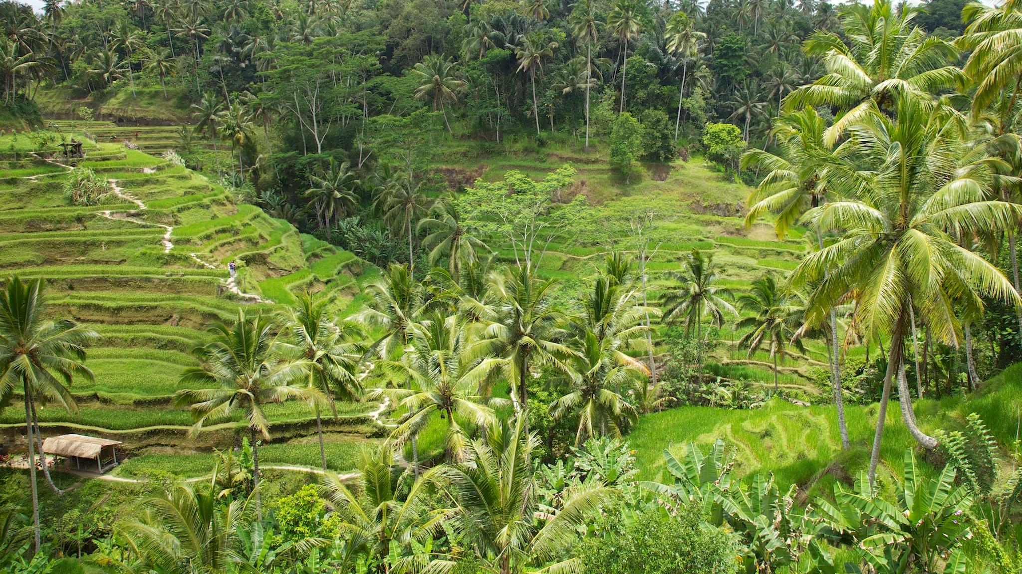 Bali  36237.jpg