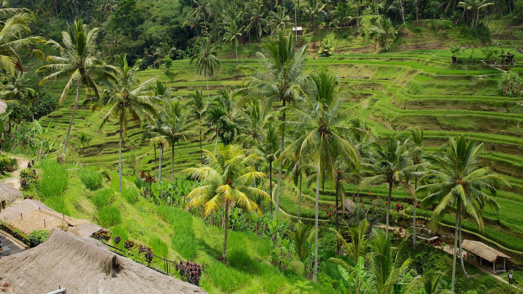 Bali  36238.jpg