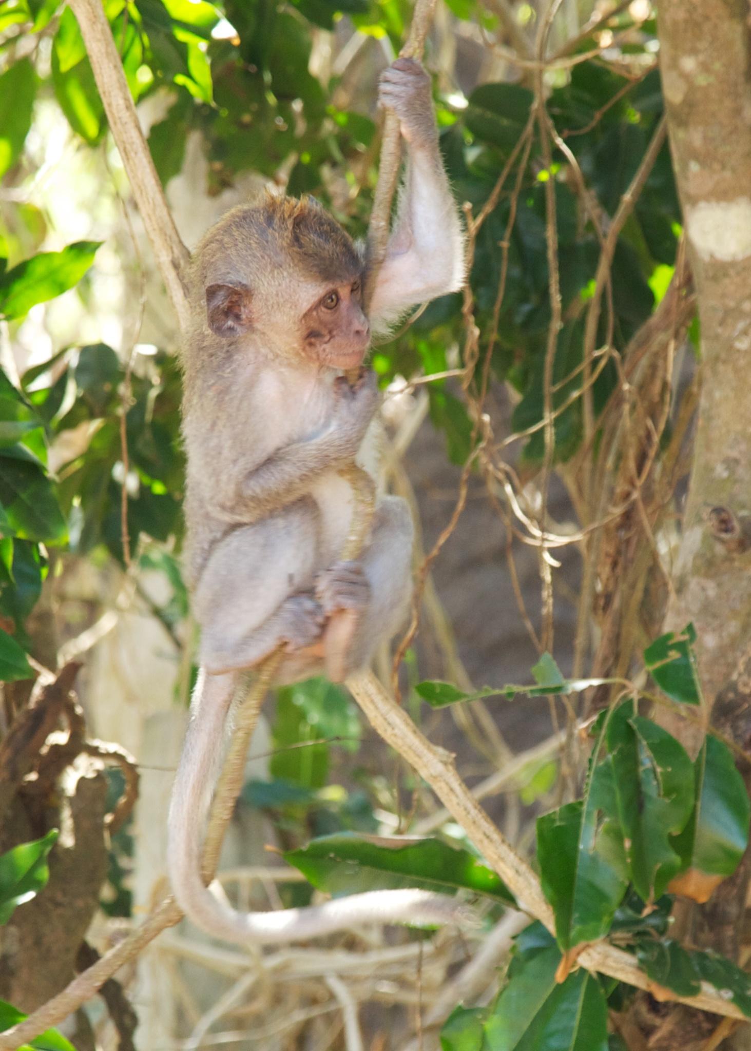 Bali  36268.jpg