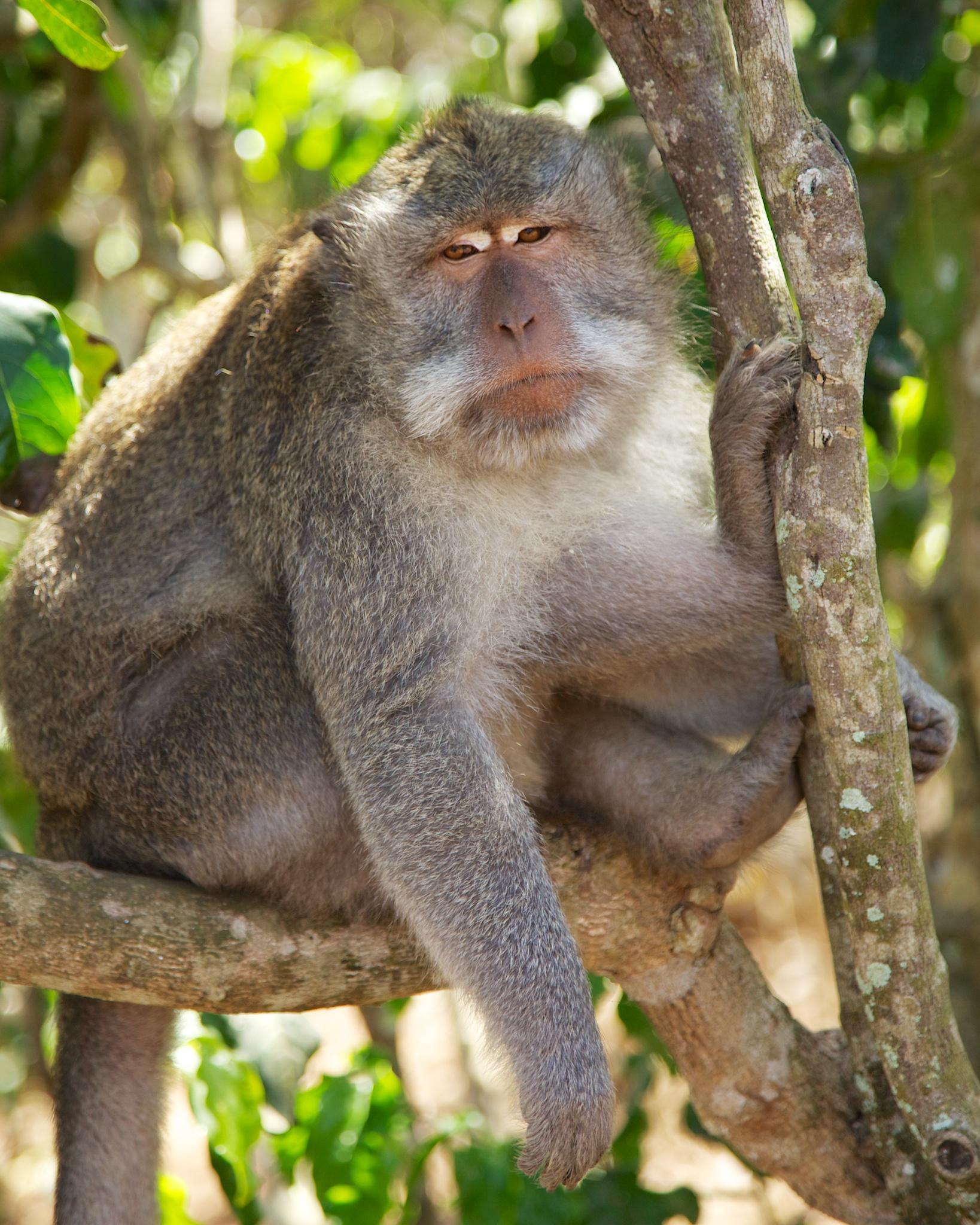 Bali  36269.jpg