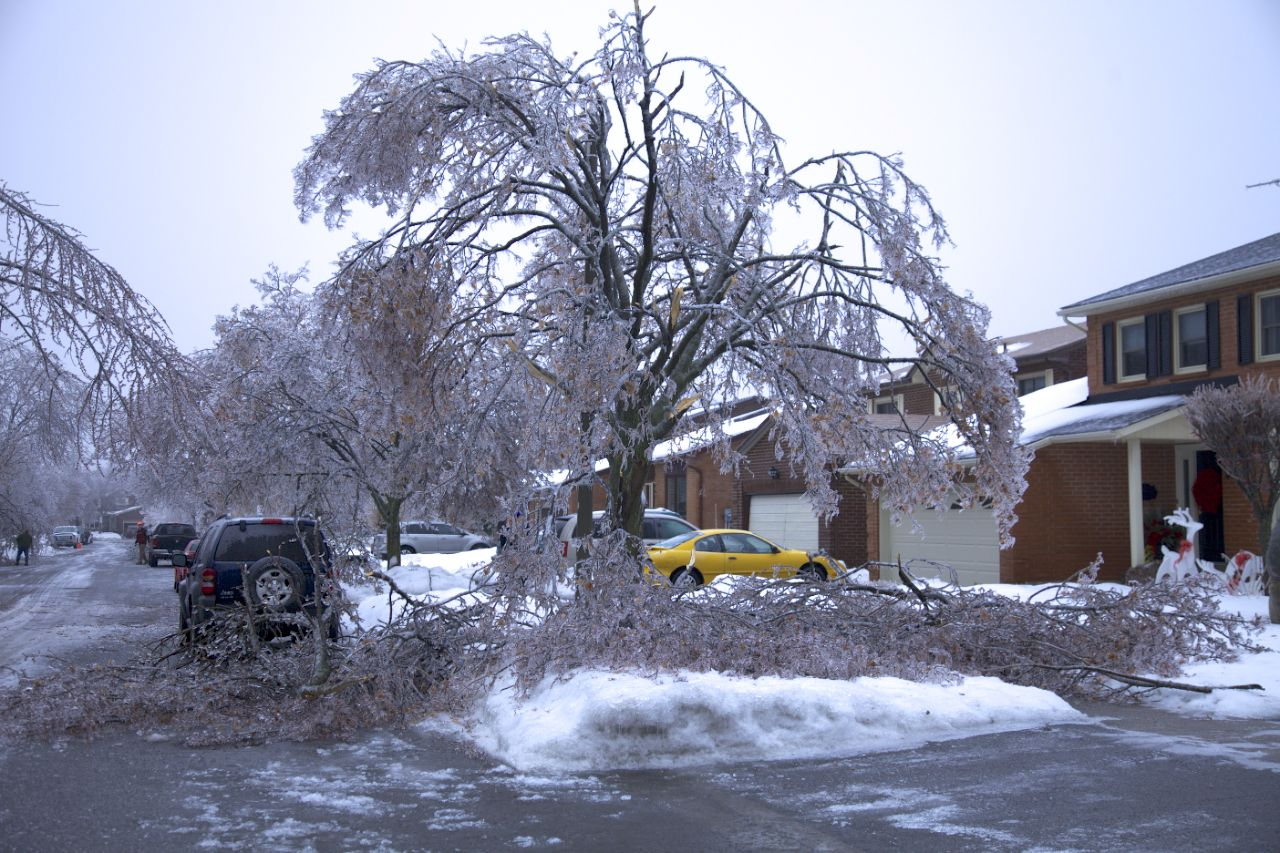 There was a lot of damage to the trees along the street that Justine's parents live on.