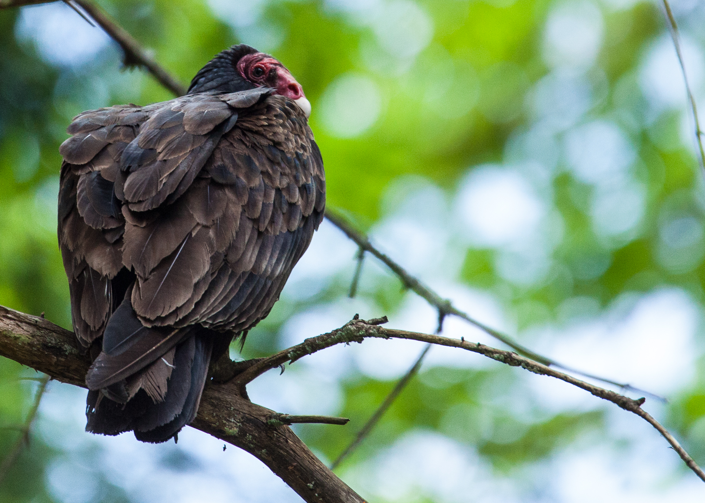 Not the prettiest birds in the world...