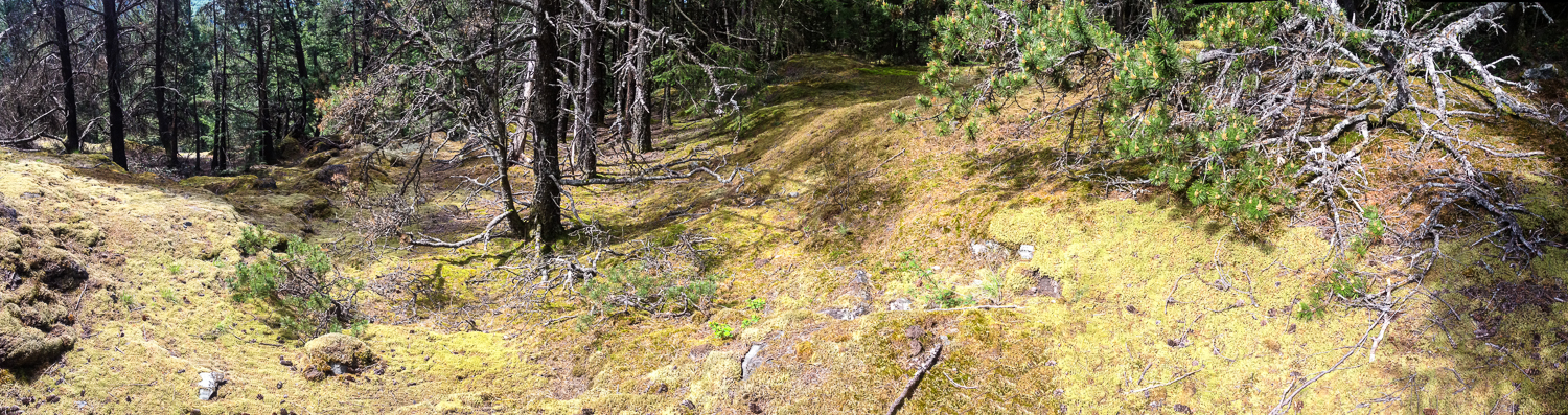 """In places, there were these open """"meadows"""" of moss-covered rocks. They were quite spongy and made for nice rest spots."""