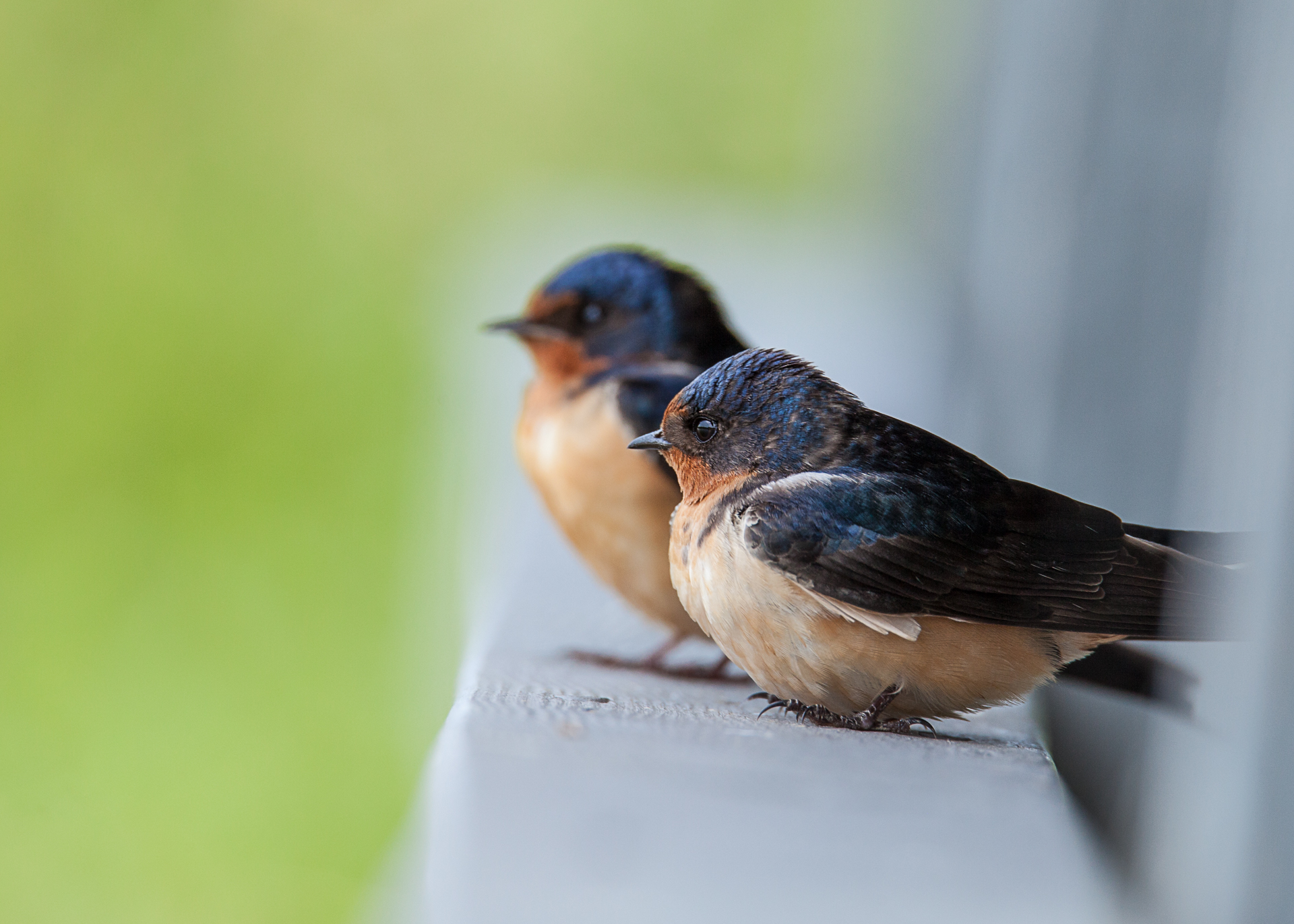 The pair of barn swallows were waiting for us to leave, so they could return to their nest.