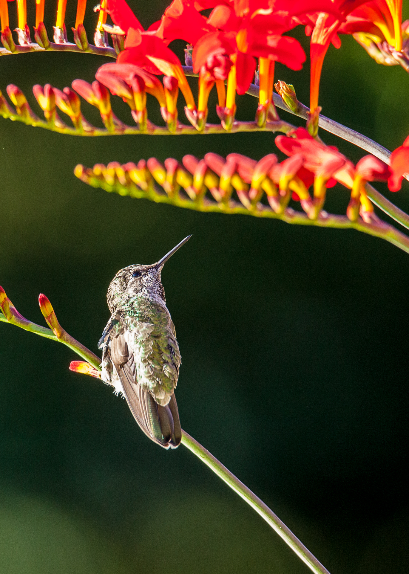 hummingbird_on_branch