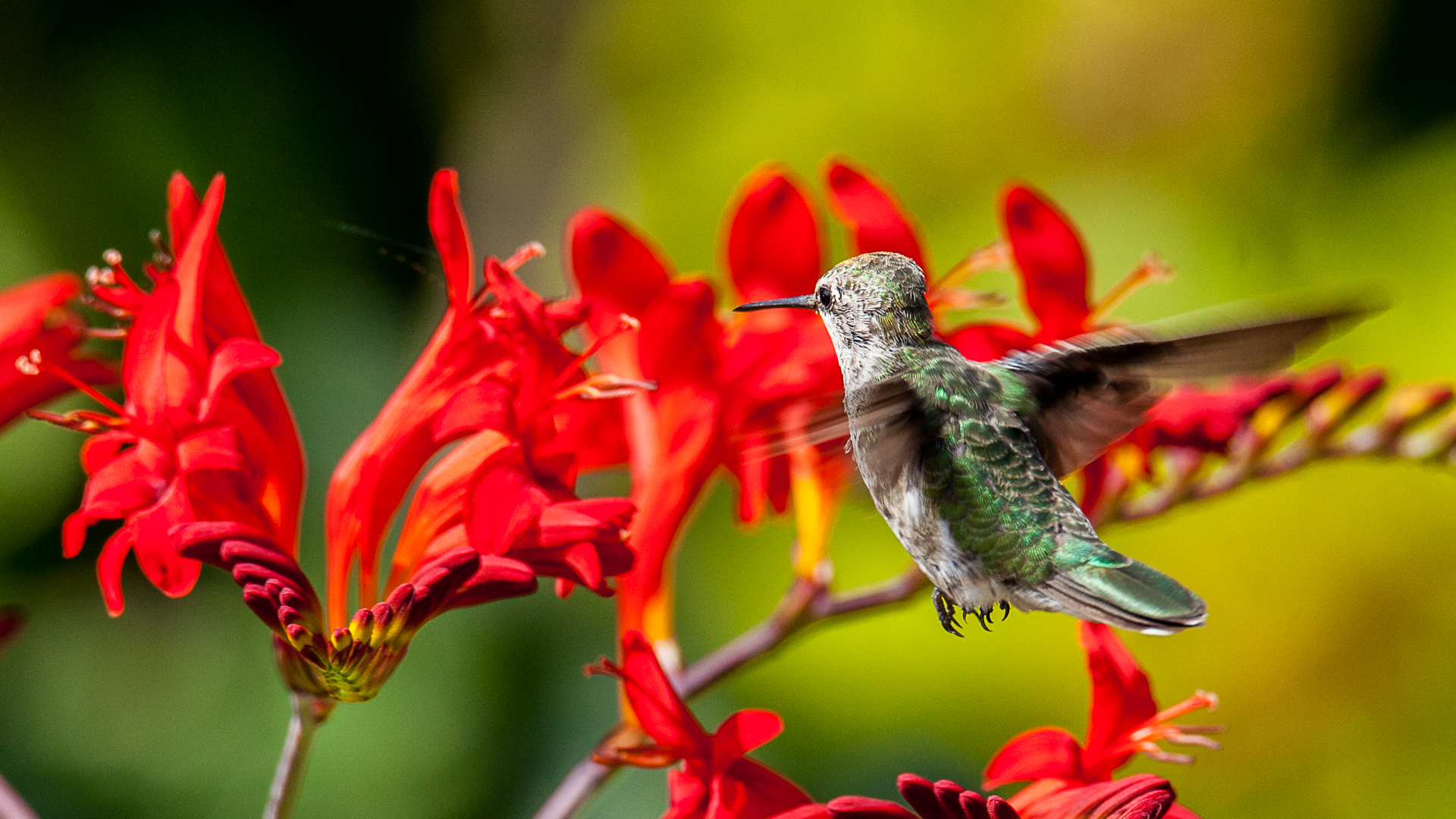 Hummingbirds-12.jpg