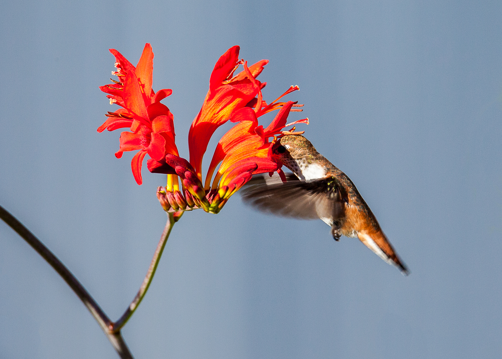 Hummingbirds-21.jpg
