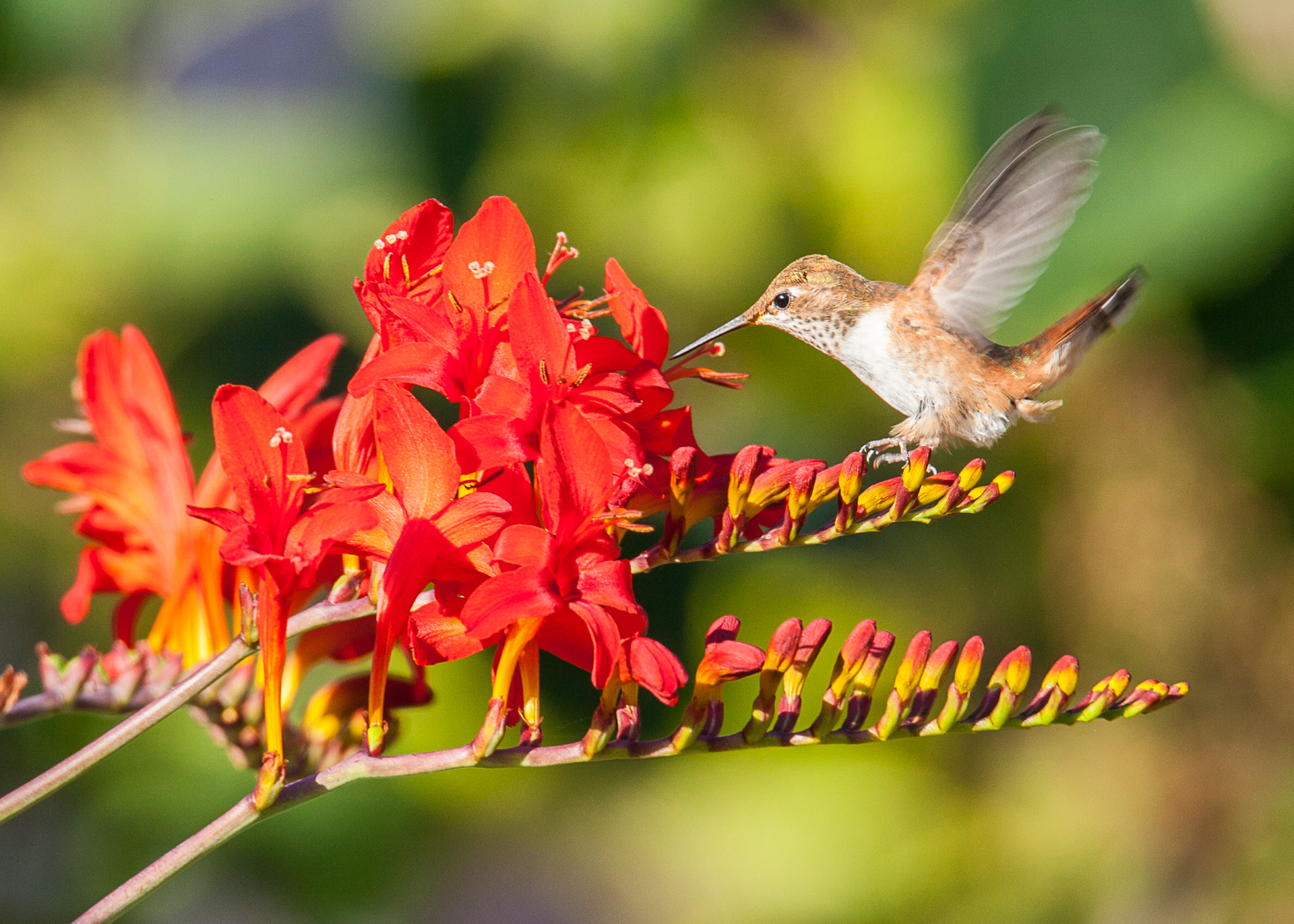 Hummingbirds-28.jpg