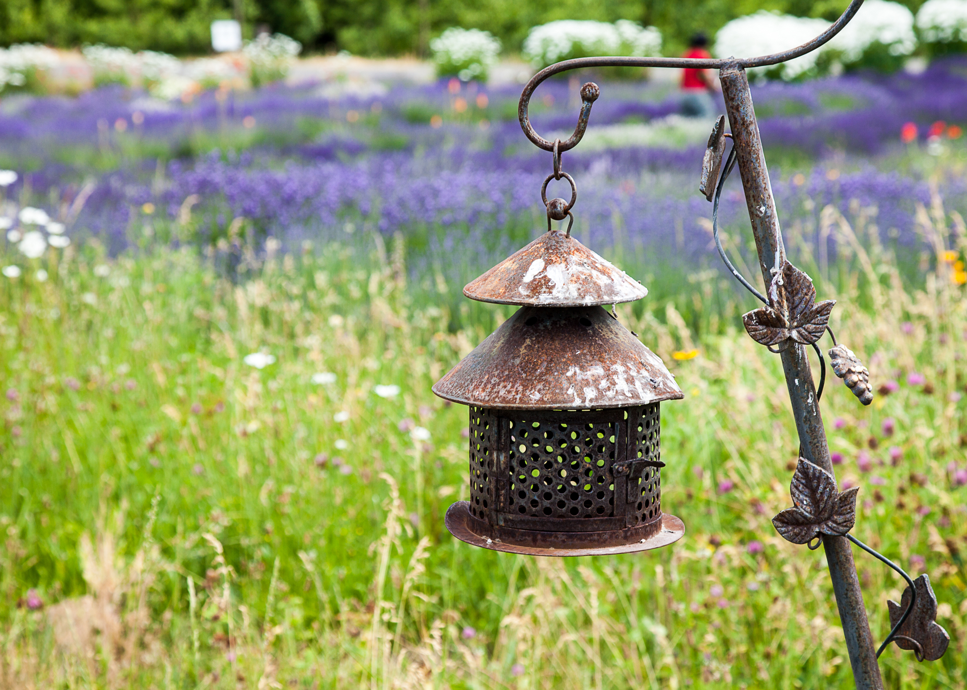 Some of the more interesting decoration around the lavender farm.