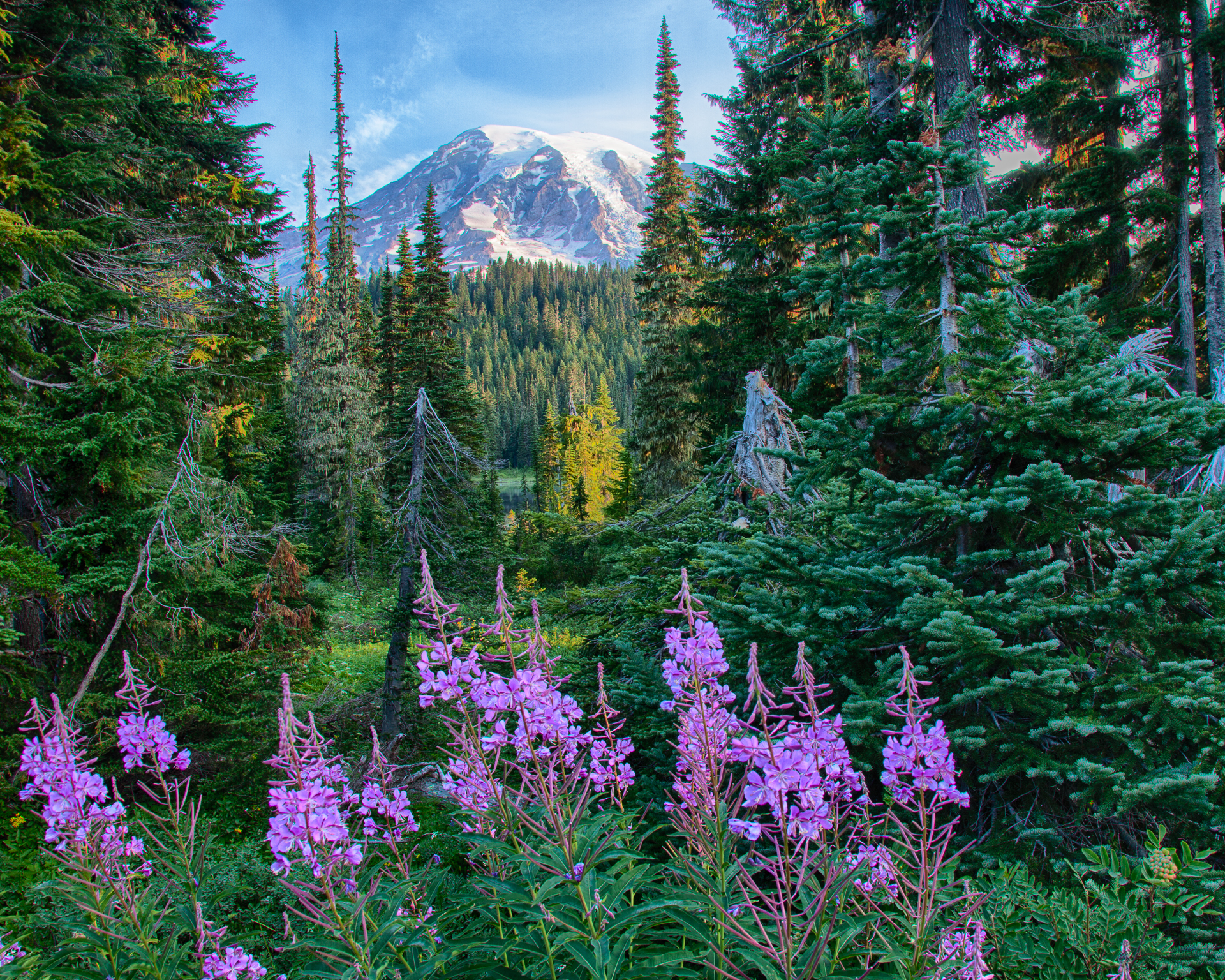 Even at lower elevations, there were lots of flowers in bloom.