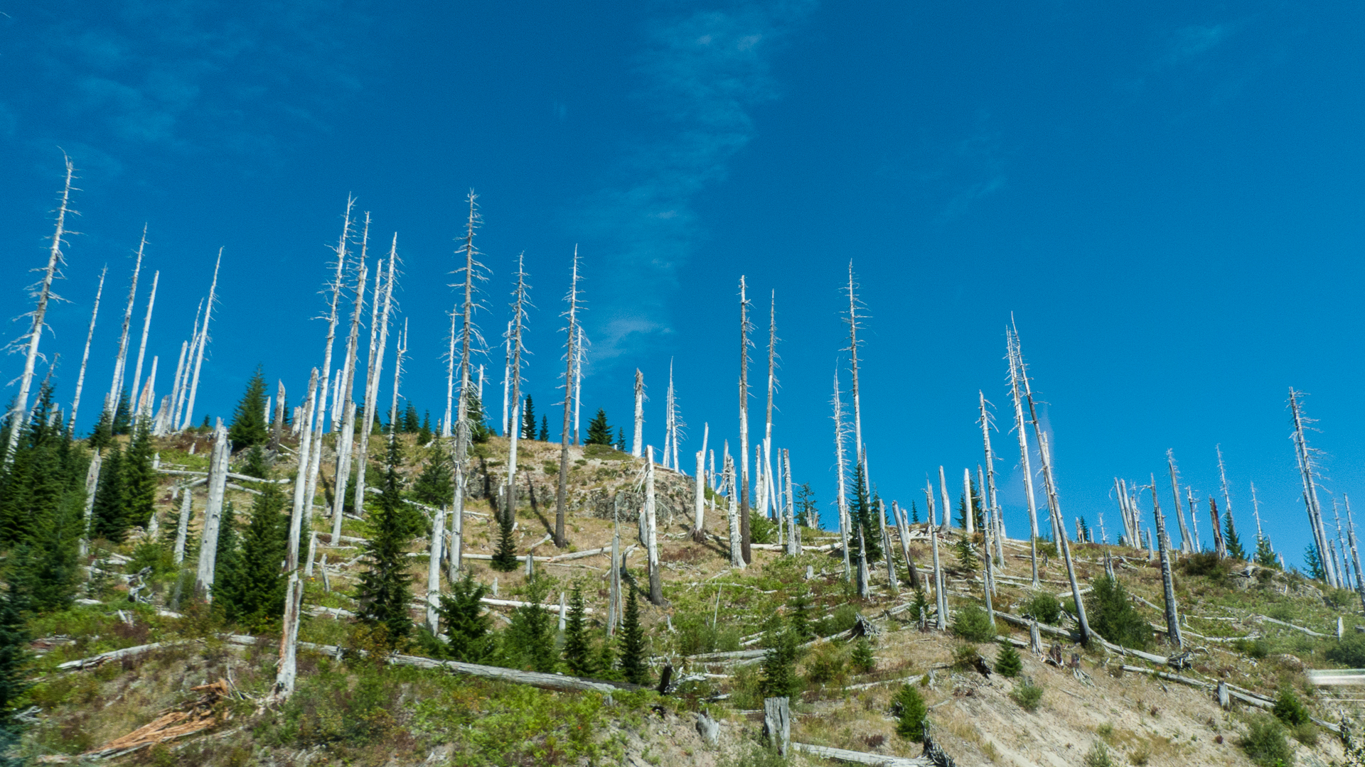 Dead trees are everywhere. But you could see where the trees were making a come back.
