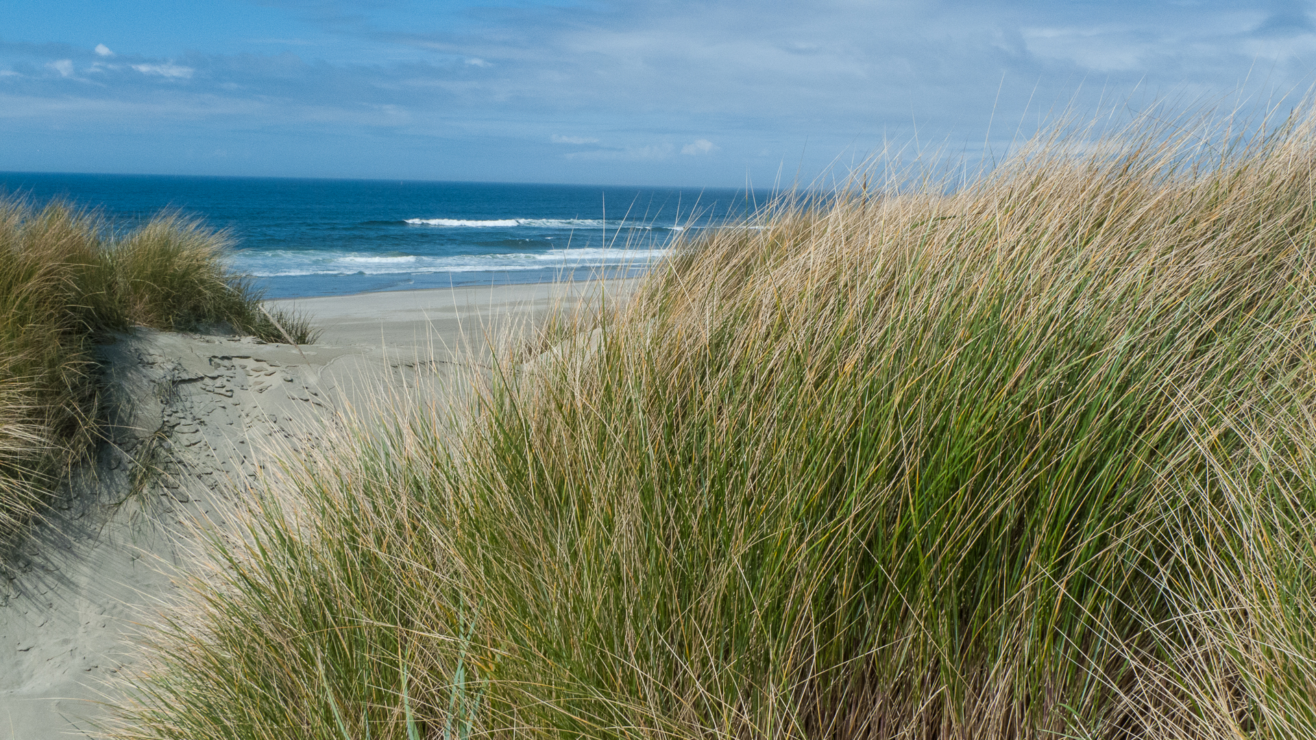 A glimpse of the ocean through the dunes.