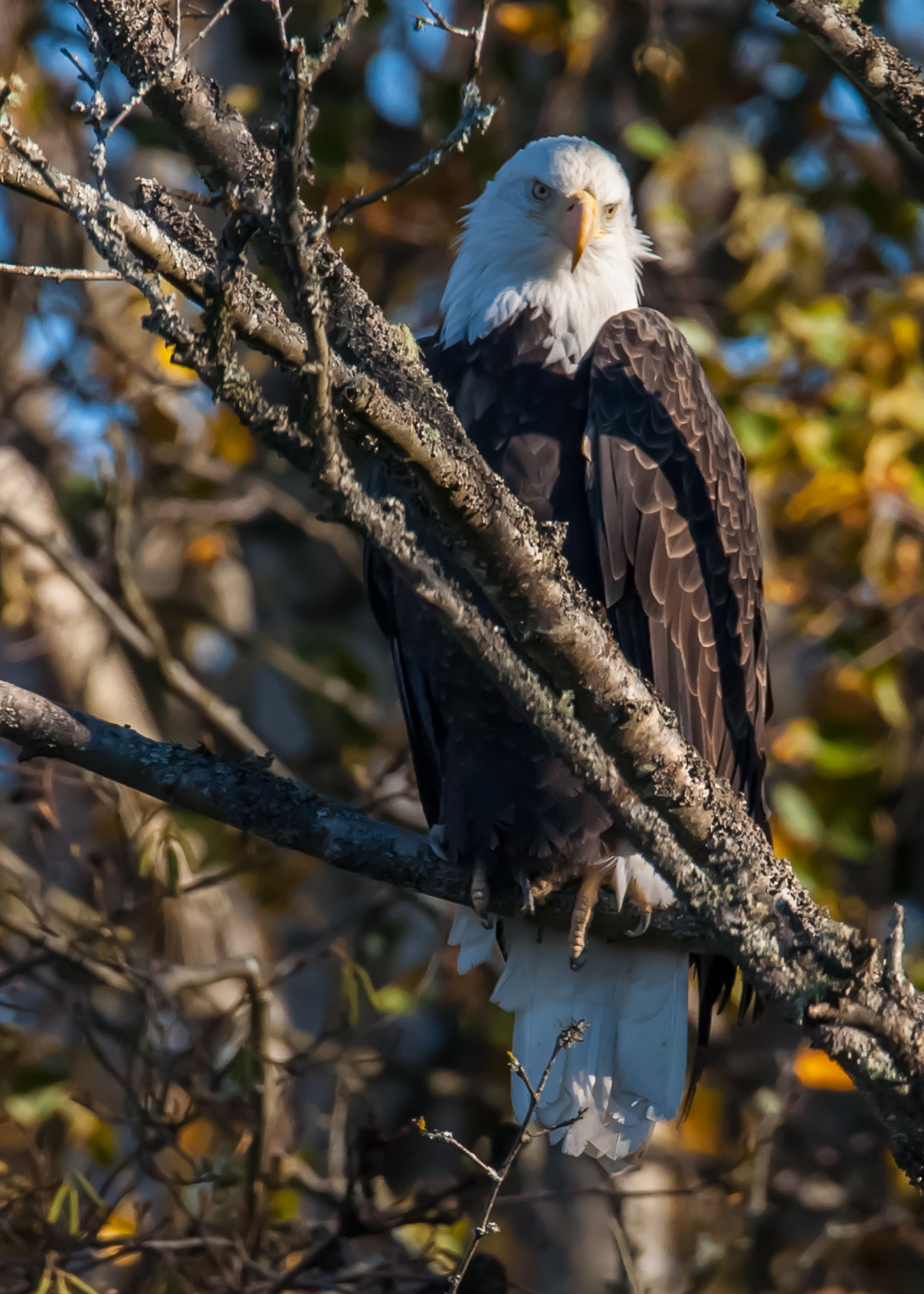 This bald eagle was keeping an eye on me.