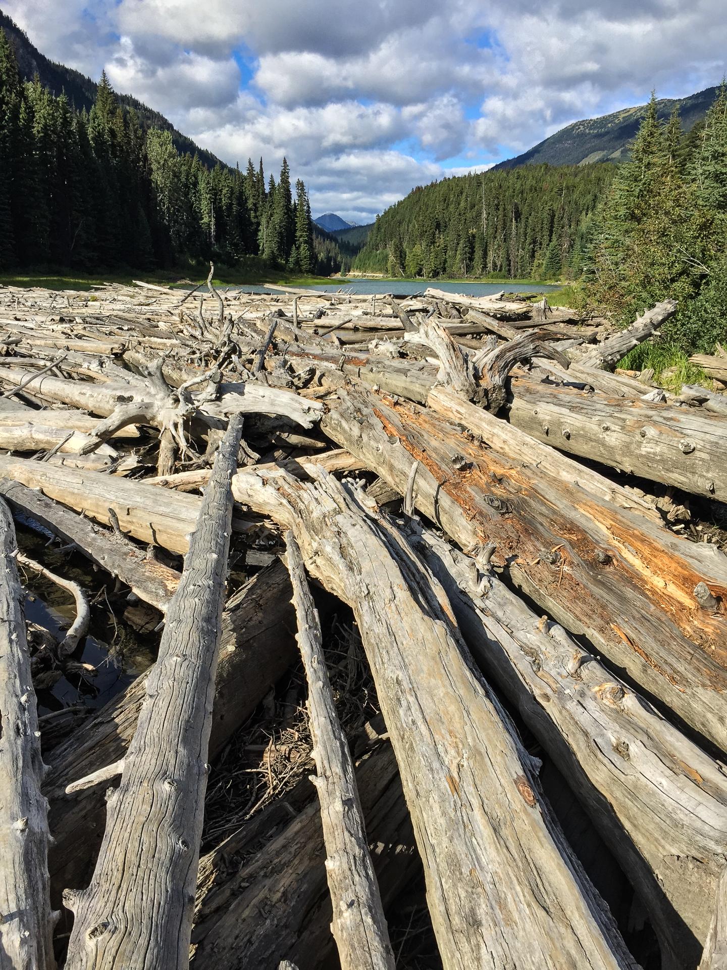 Duffy Lake Log Jam