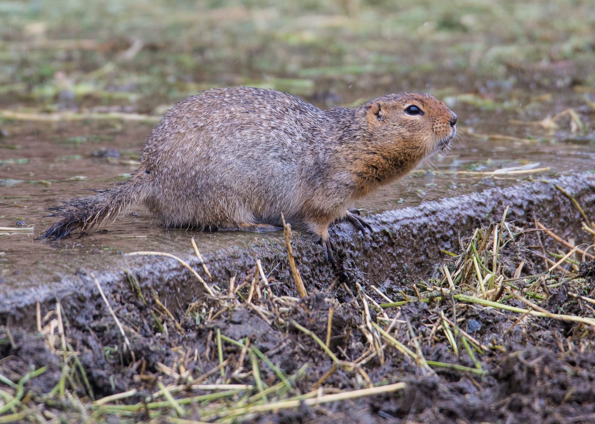 Even the ground squirrels were making themselves at home.