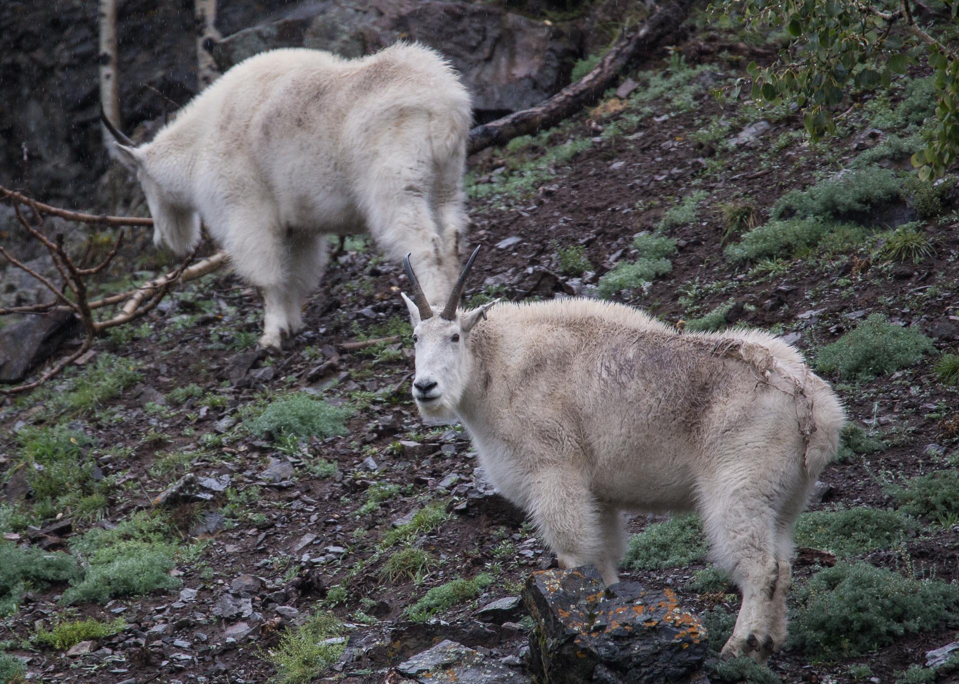 Yukon D7-42.jpg