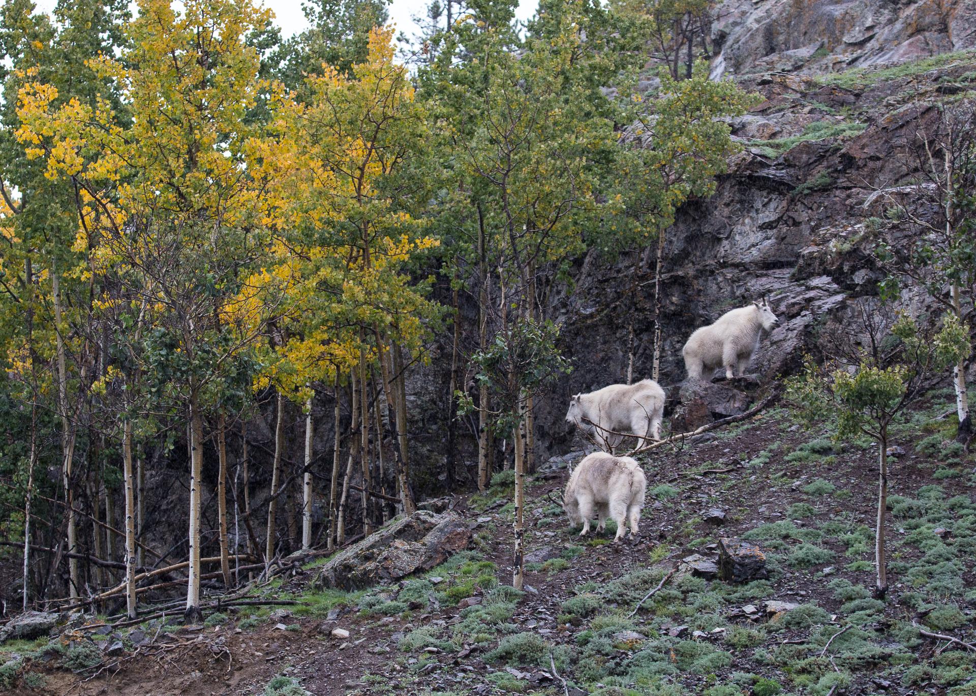 Yukon D7-43.jpg
