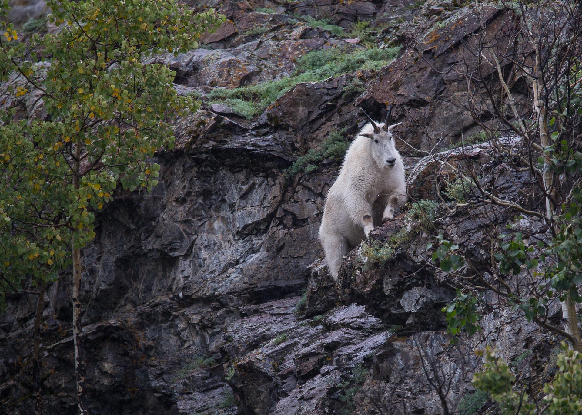 Yukon D7-45.jpg
