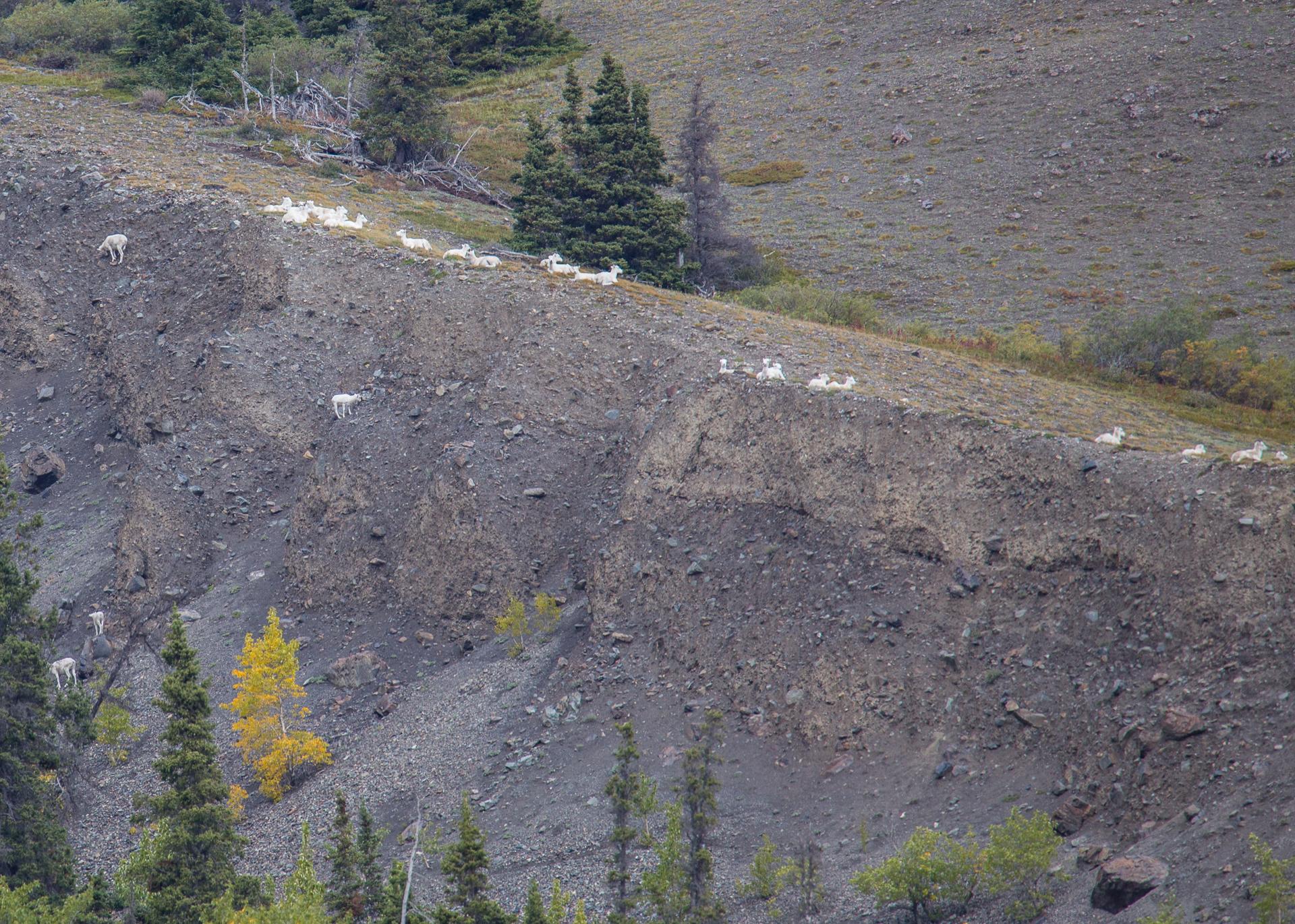 Yukon D9-18.jpg