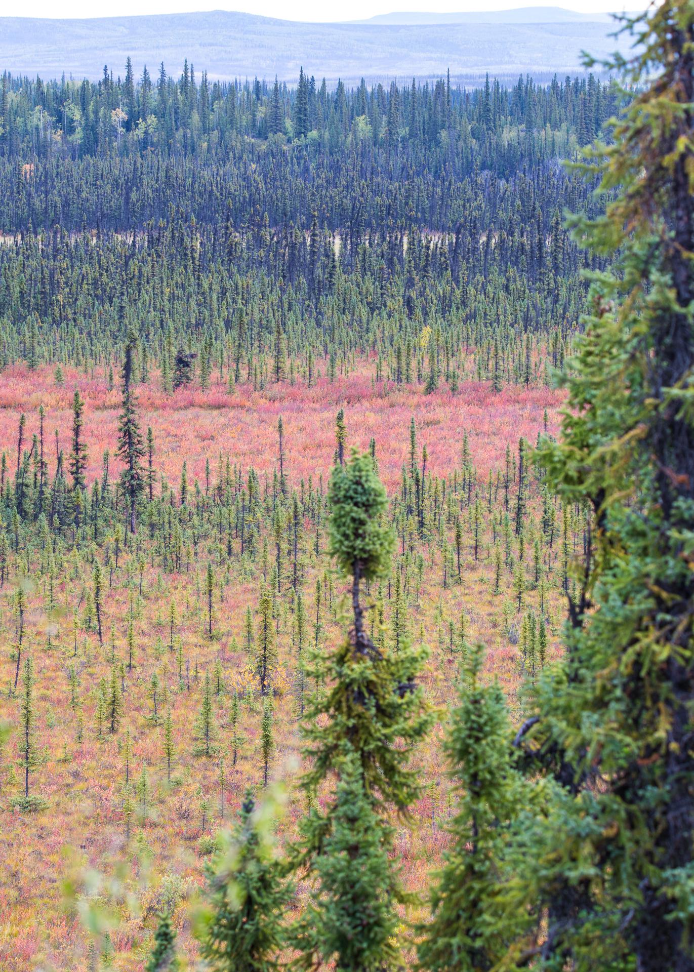Yukon fall colours