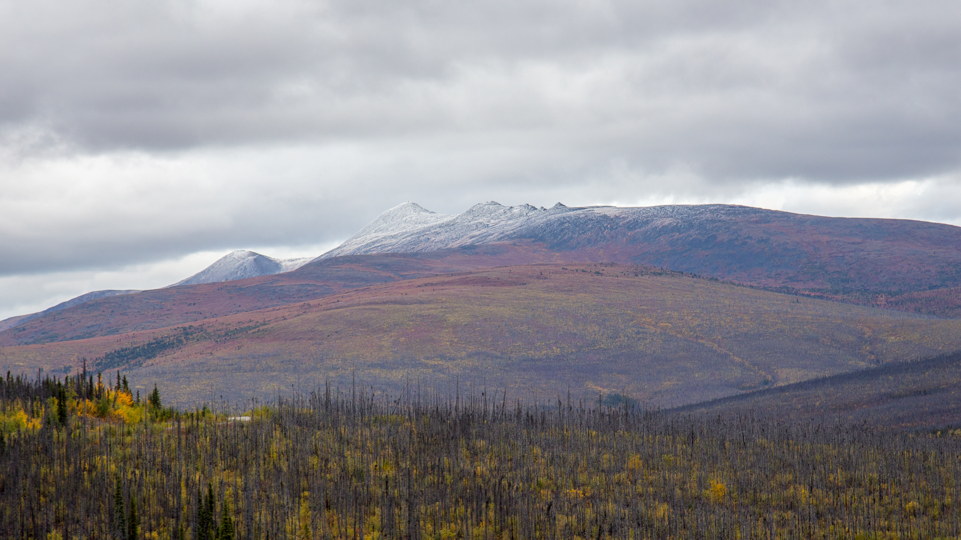 Snow-capped mountains amid the fall colours.