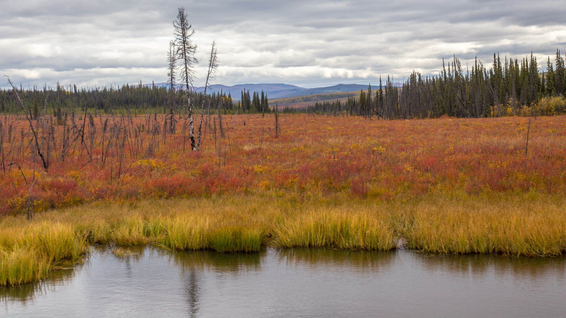 A small pond with the fall colours.