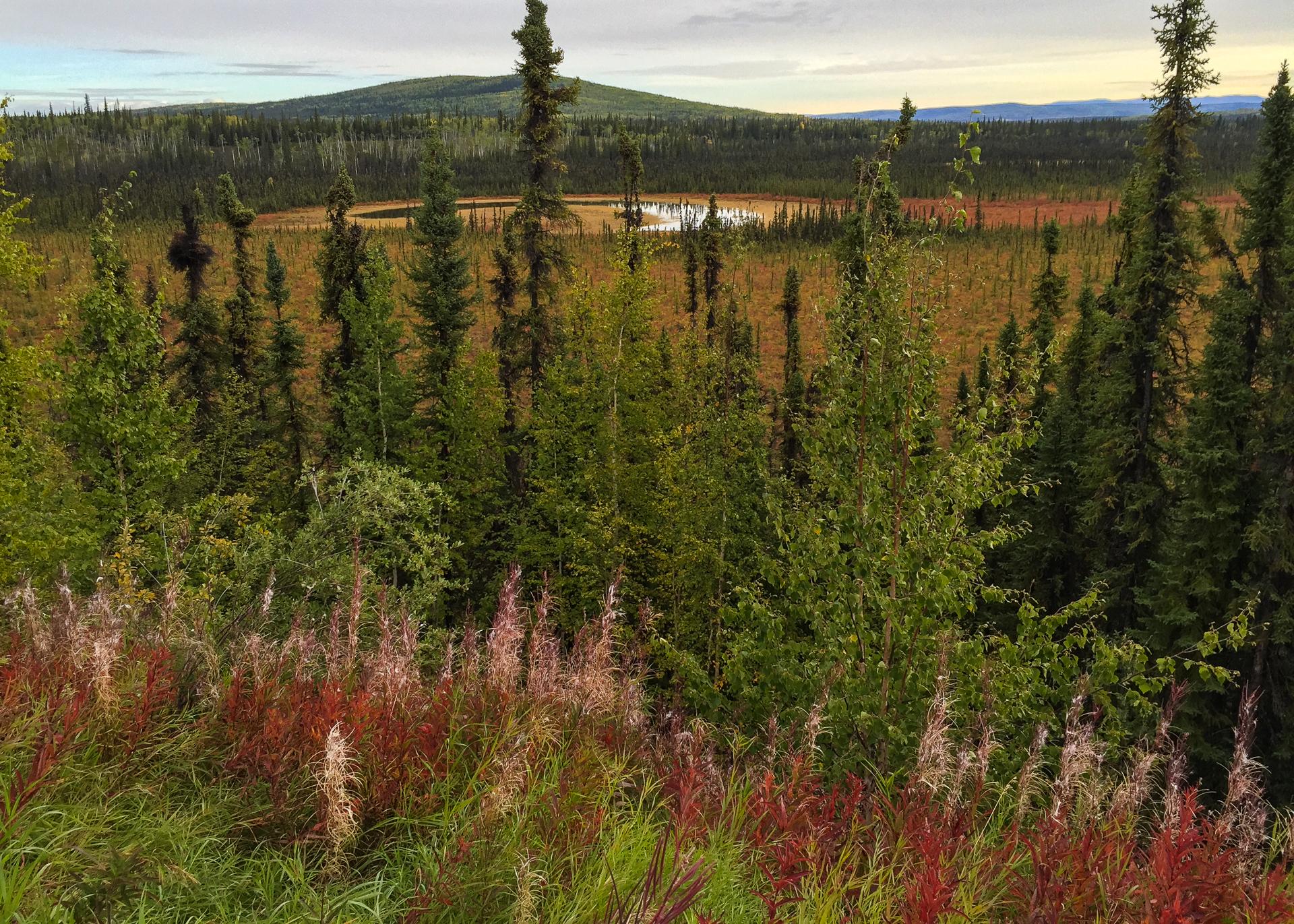 Yukon D10-4.jpg