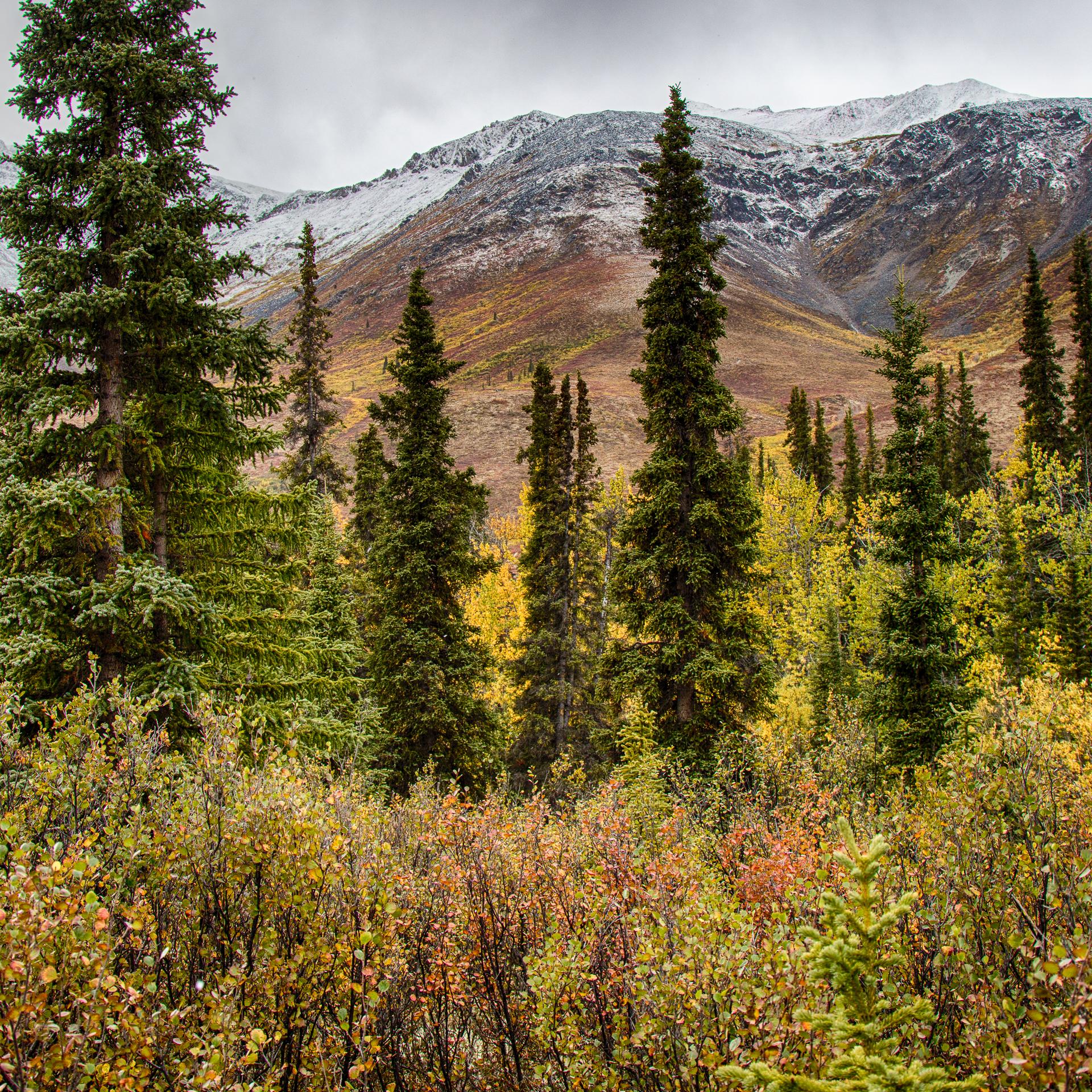 Yukon D11-37.jpg