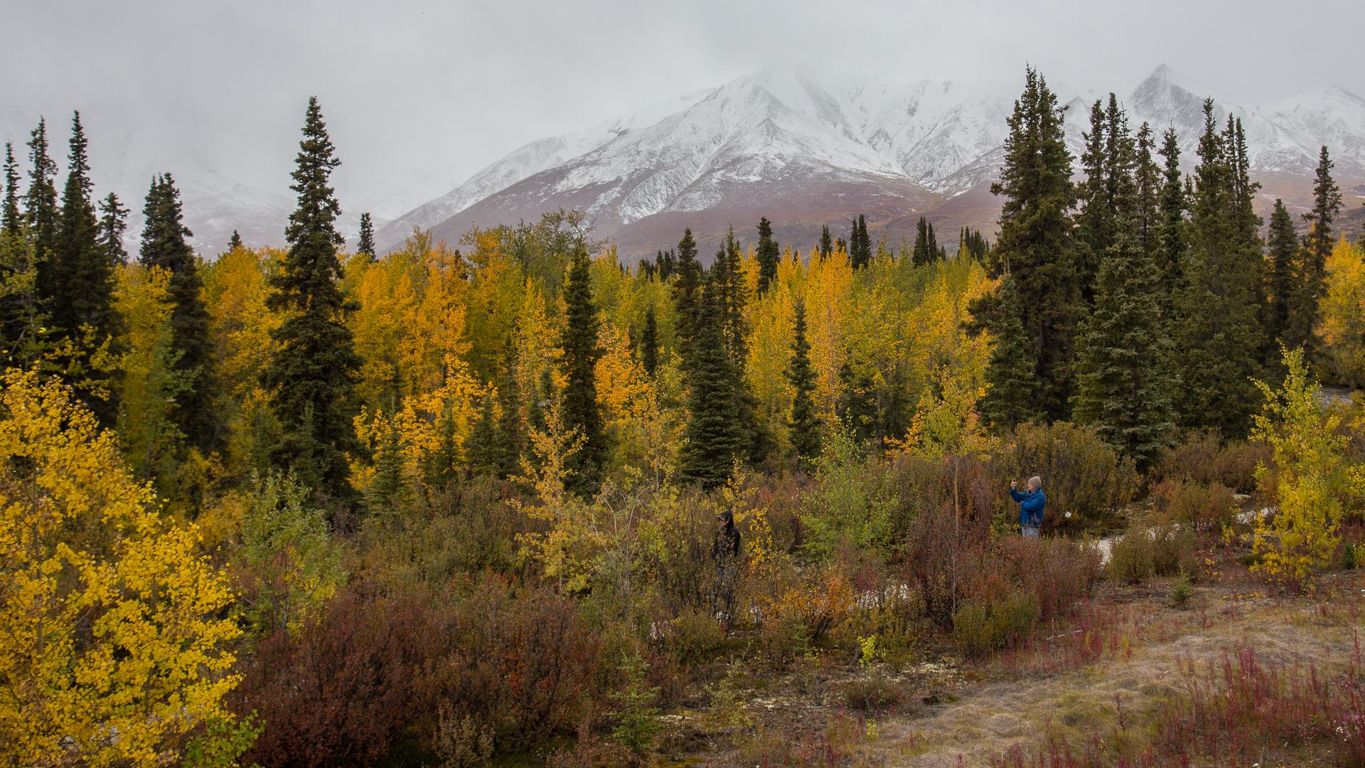 Yukon D11-39.jpg