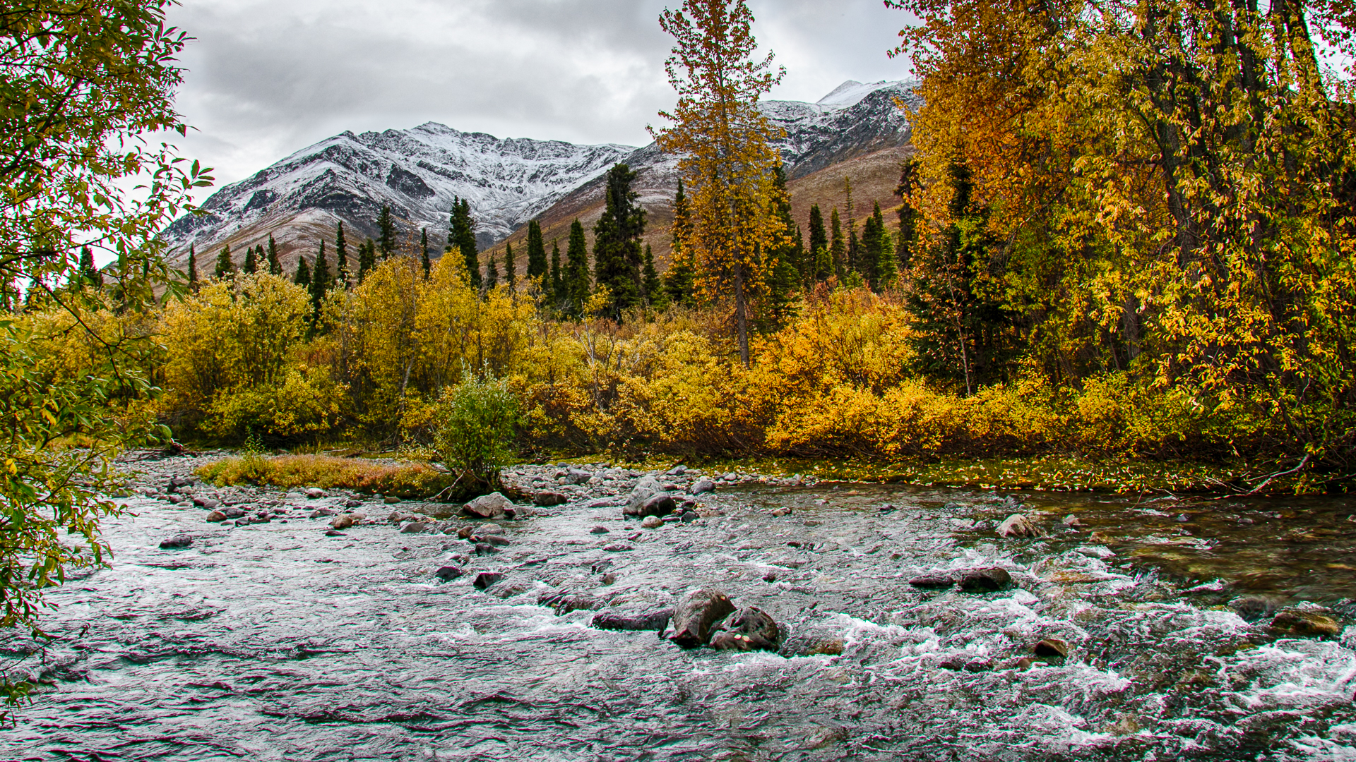 Yukon D11-48.jpg