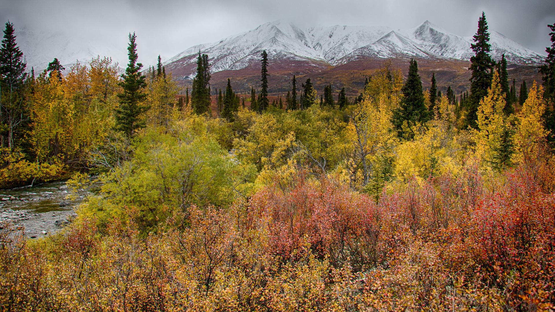 Yukon D11-51.jpg